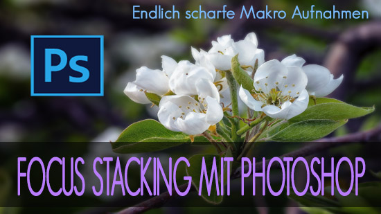 KITEA - Focus stacking mit Photoshop